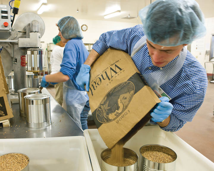A photo of a worker pouring wheat into cans at the LDS (Mormon) Cannery.